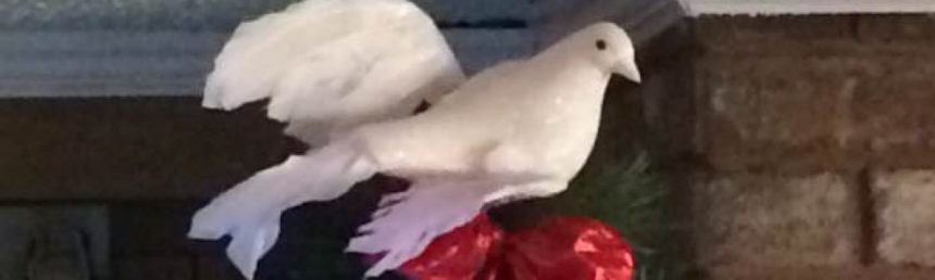 cropped-dove.jpg
